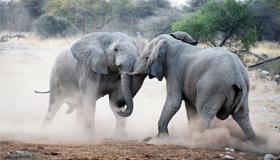 Photo of elephants